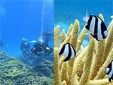 サンゴとウミガメ