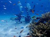 カラフルな小魚を観るダイバー