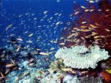 サンゴに群がるカラフルな魚