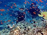 赤い魚の群れとダイバー
