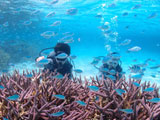 サンゴ礁で遊ぶダイバー2人