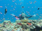 たくさんの熱帯魚とサンゴ礁と戯れるダイバー