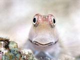 こちらを見つめる海の生物
