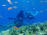 サンゴ礁に群がる熱帯魚とダイバー