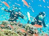 色鮮やかな魚と戯れる女性ダイバー