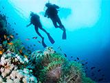 サンゴ礁の上を泳ぐダイバー
