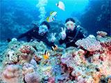 カラフルなサンゴ礁の上でポーズ