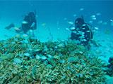小魚の大群と戯れるダイバー