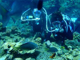 海底でのんびりするダイバー