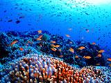 何千匹かの魚の大群
