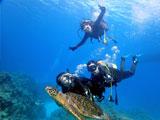 ウミガメに抱きつくダイバー