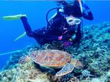 ウミガメを観察するダイバー