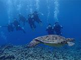 大きなウミガメの近くに集まるダイバー