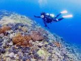 サンゴに群がる小魚