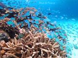 イソギンチャクと大量の魚