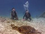 海底の珍しい生物