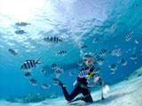 熱帯魚の群れとダイバー