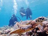 ウミガメを追いかける三人のダイバー