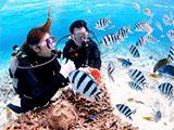 綺麗な魚と戯れるペアダイバー
