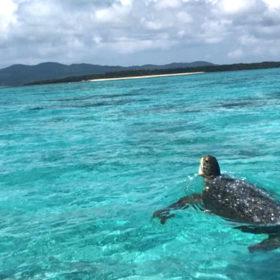 海面をジタバタするウミガメ