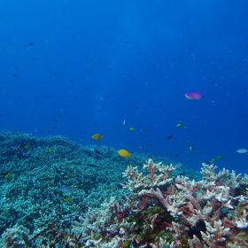 慶良間ブルーとカラフルな魚