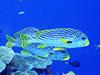 黄色と黒のカラフルな魚