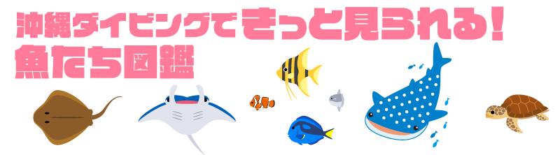 きっと見られる!魚たち図鑑