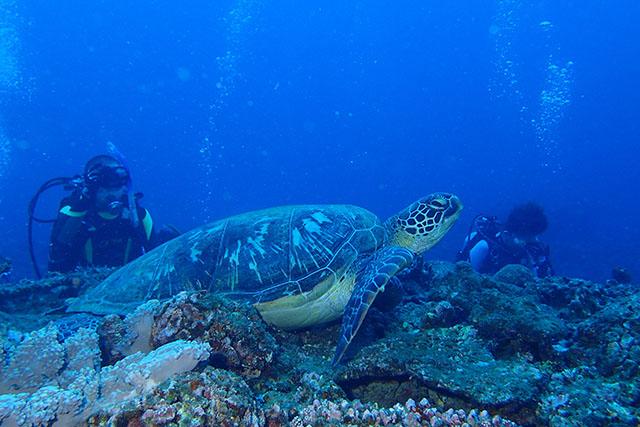 超ビッグサイズのウミガメ