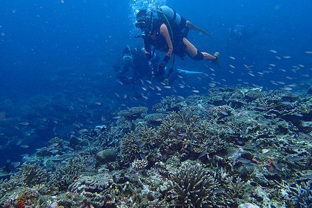 元気な珊瑚