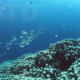 瀬底島パンプキン全景
