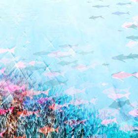 色とりどりの魚がいる海