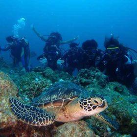 ウミガメの前に集まるダイバー