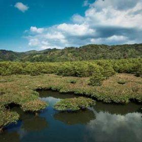 沖縄のマングローブ林