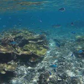八重干瀬のサンゴと魚